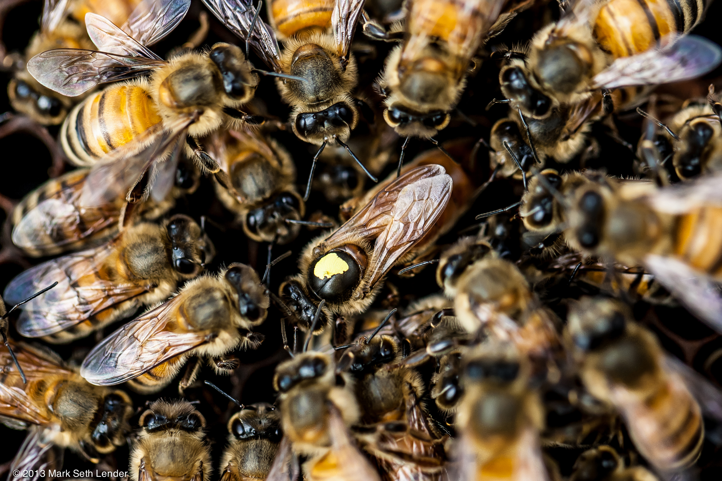 The Role of the Queen Bee