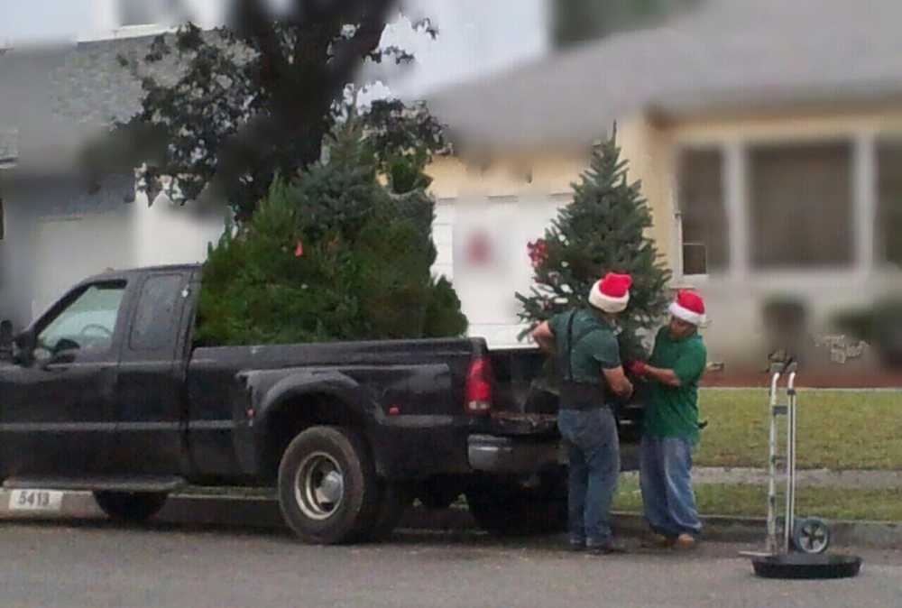 The Living Christmas Company Packs  Trees Onto One Truck And Delivers Them Right To Your Door P O Scott Martin