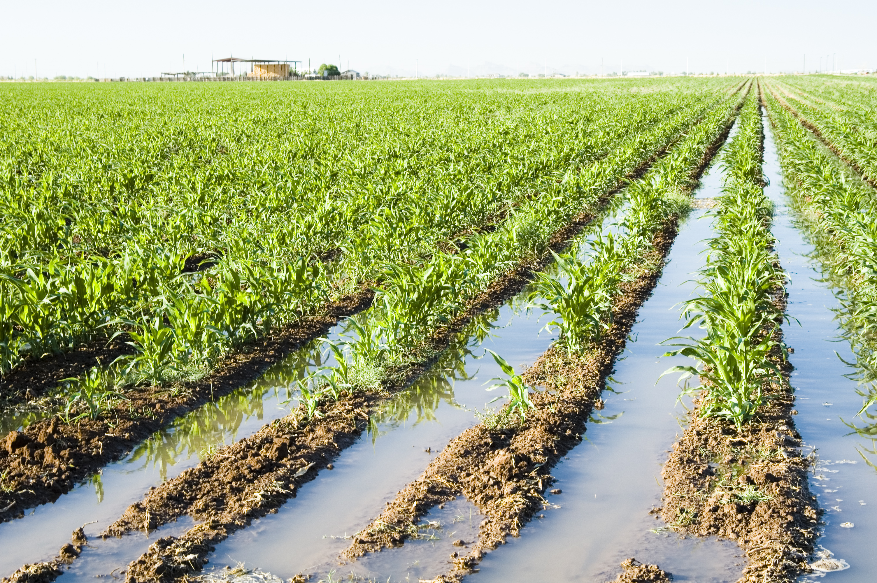 Image result for over watering of agriculture fields